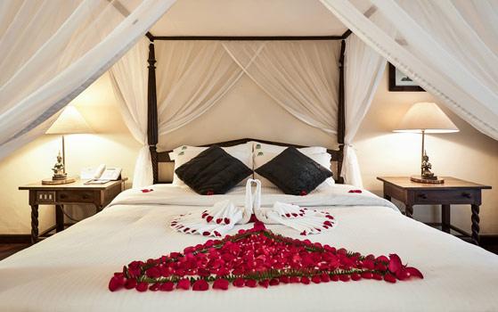 The Safari Park Honeymoon